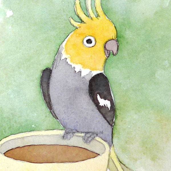 Cockatiel on a teacup